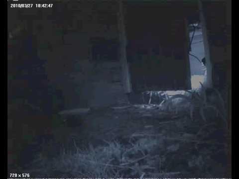 Indy the hedgehog comes out of hibernation