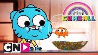 Die fantastische Welt von Gumball   Der Anfang (Ganze Folge)   Cartoon Network