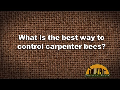 Q&A - What is the best way to control carpenter bees?