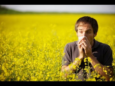 HOME REMEDIES: HOW TO CURE HAYFEVER NATURALLY