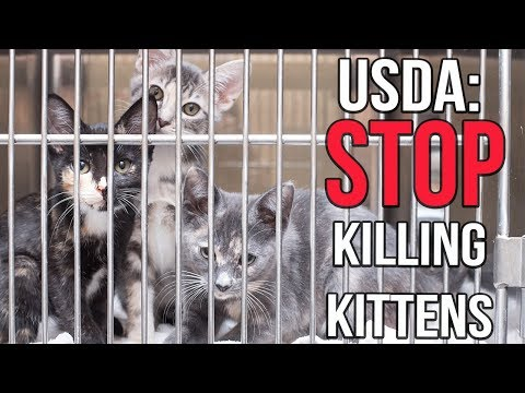 Tell the USDA to Stop Killing Kittens