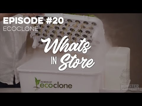 What's in Store? #20 TALK ABOUT: Humboldt-Ecoclone