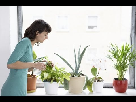 HOW TO  CARE  OF INDOOR PLANTS
