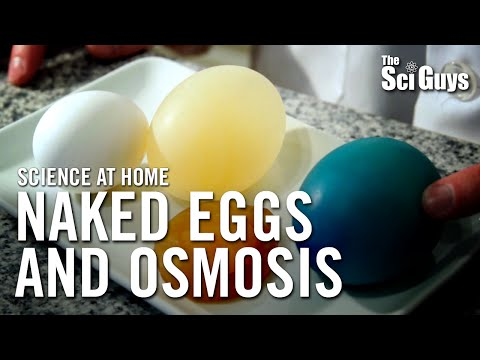 The Sci Guys: Science at Home - SE1 - EP14: The Naked Egg and Osmosis