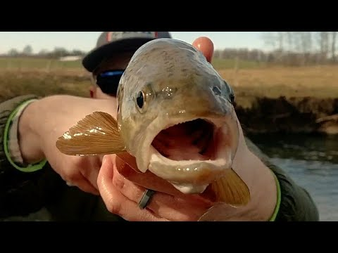 How to Read a Small Trout Stream for Catching BIG Trout feat. KastKing & LTB