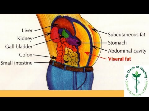 Why Is Visceral Fat So Dangerous