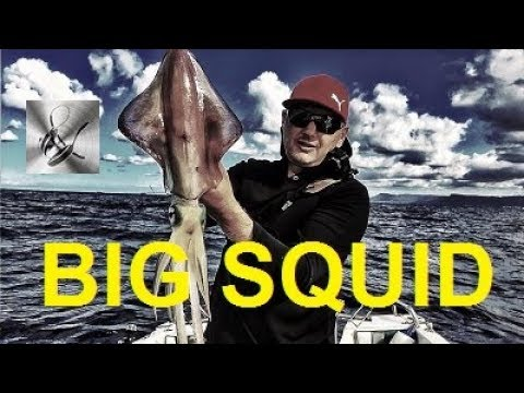 Squid Fishing with Mr Squid Dave Austin | The Hook and The Cook