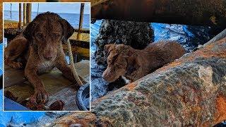Thailand Dog Rescue Videos - votube net