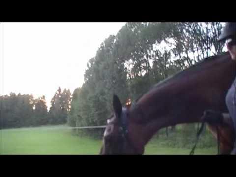 120718 leading my headshaking horse
