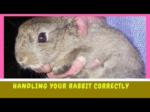 Handling Your Rabbit