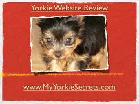 Choosing The Right Yorkie Puppy Food!