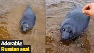 Adorable Seal enjoys stroke from passersby on shore of Lake Baikal