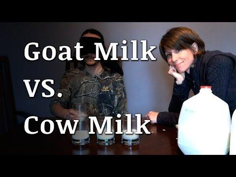 Blind Taste Test: Goat Milk vs Cow Milk