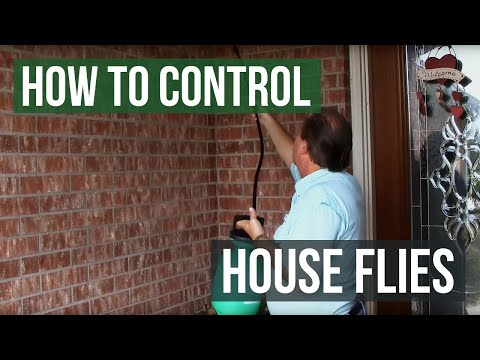 How to Control and Eliminate House Flies