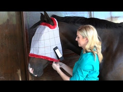How to Choose the Best Fitting Fly Mask for Your Horse