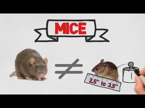 Mice Control in Miami - Toro Pest - Call: 305-594-4767