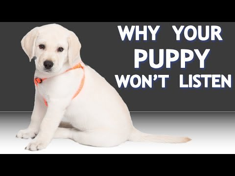 My 8 week old puppy won't listen! What should I do?