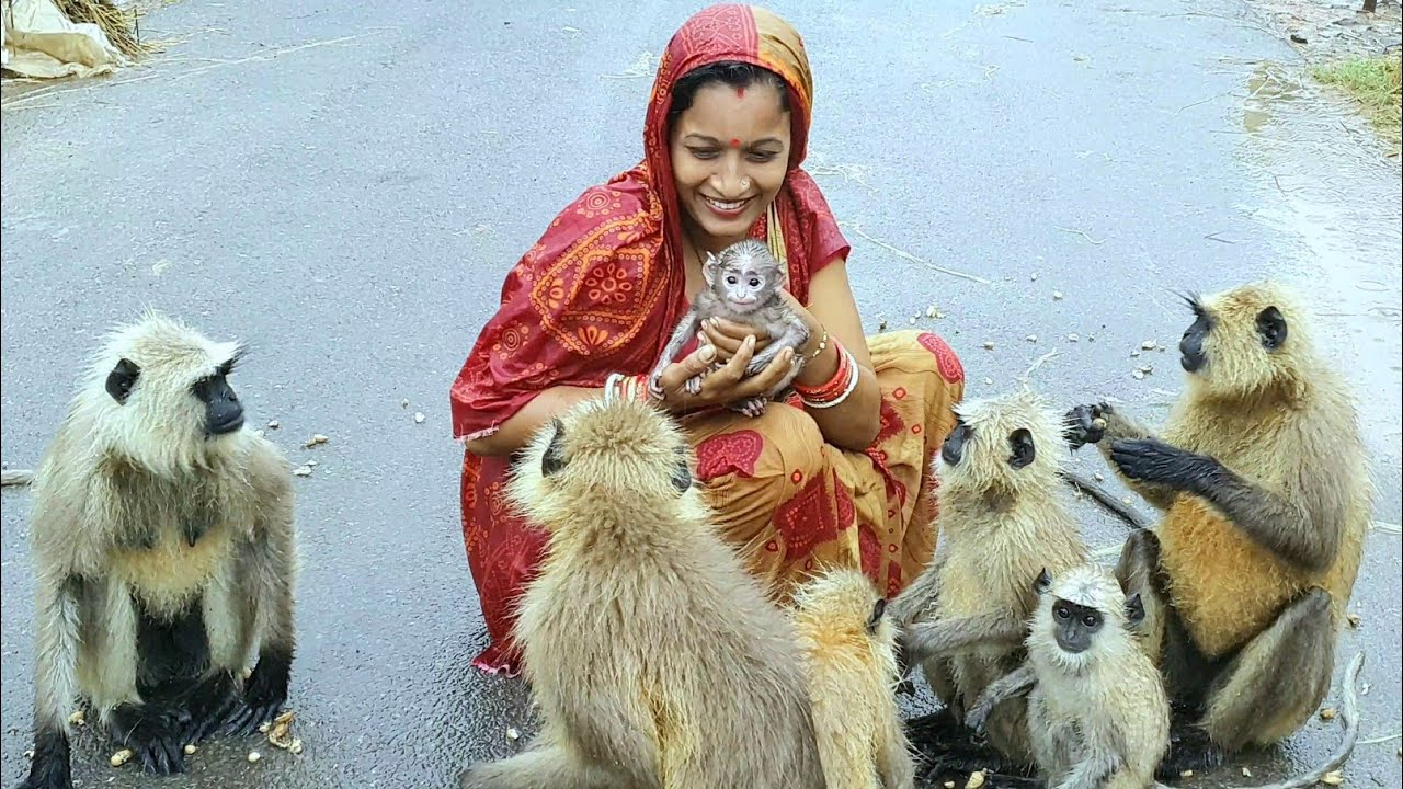 Finally she won the heart of the mother langur give her new born baby to the womans hand