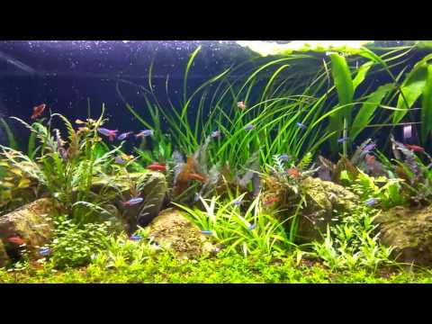 Pearling Plants with Full Spectrum LED - Part 2