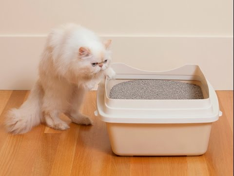 How To Stop Your Cat From Peeing and Spraying  Outside The Litter Box
