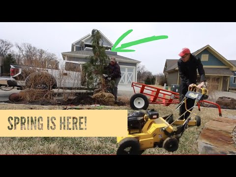 Spring Aeration ► Replace A Dead Tree ► I Am Moving Out Of My Mom and Dad's House!