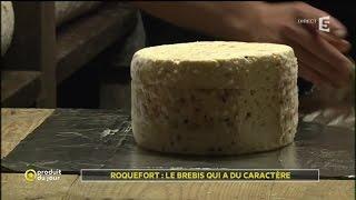 Roquefort : le brebis qui a du caractère