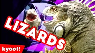 the funniest cutest lizards  reptiles bloopers of 2016 weekly compilation  kyoot animals