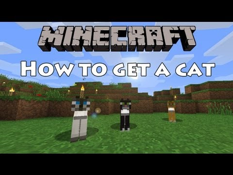 Minecraft - How to get a cat