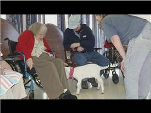 Dog Training & Care : Careers in Dog Training
