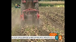 Iran 5300 Hectares Mechanized Potato harvest, Gorgan county برداشت مكانيزه سيب زميني گرگان ايران
