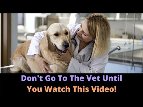 Top 5 Mistakes Dog Owners Make At The Veterinarian's Office! Are You Guilty Of These?