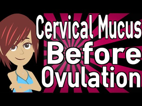Cervical Mucus Before Ovulation