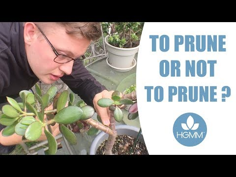 Can You Over Prune Plants?