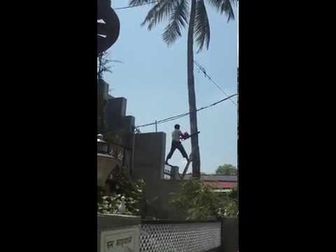 Cutting Down long coconut Tree