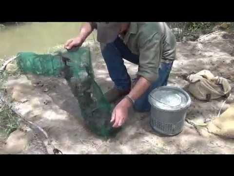 Accordion Minnow / Crawfish Trap Check Pt. 2
