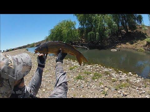 Carp Fishing Australia: Fly Fishing