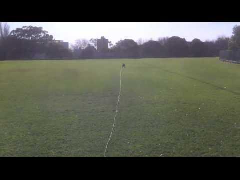 Teach fetch with trailing leash.