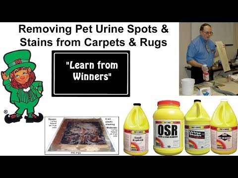 How to Remove Pet Urine Odors and Stains from Carpets & Rugs