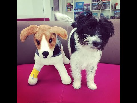 Dog playing with toy dog