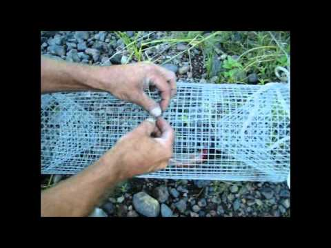 Trapping Crawfish