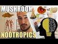 Fungi Nootropics Lion's Mane Mushroom, Red Reishi, Cordyceps Militaris, Chaga Benefits💯
