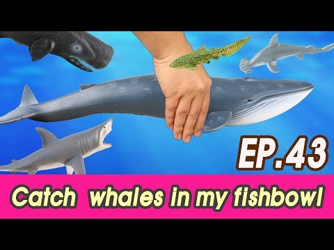 [EN] #43 Let's catch whales in my fishbowl, kids education, Collecta figureㅣCoCosToy