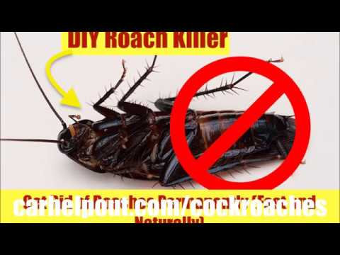 How To Get Rid of Roaches Instant Fast in Your Car Best Way To Remove Cockroach Killer Bait Powder