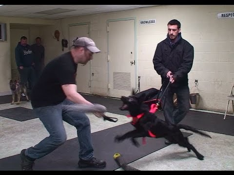 Personal Protection Training for Puppies: Preparing for Weapon Disable (K9-1.com)
