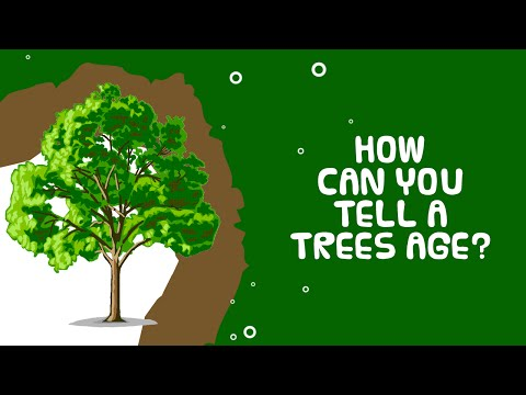 Interesting Facts About Plant | Trees Age | How Can You Tell Their Age