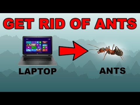 Remove Ant's From Your Laptop ! - Get Rid of Ants!!