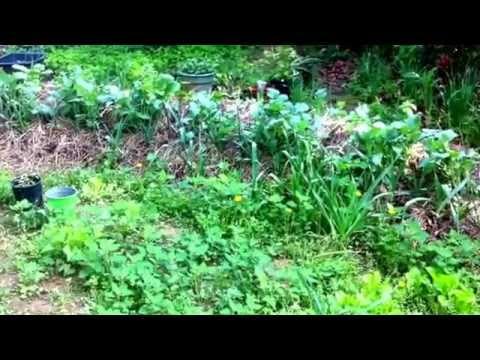 Wild food and huglekultur mound garden