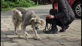 Download Homeless Dog Runs Toward Us Trying To Ask For Help Video