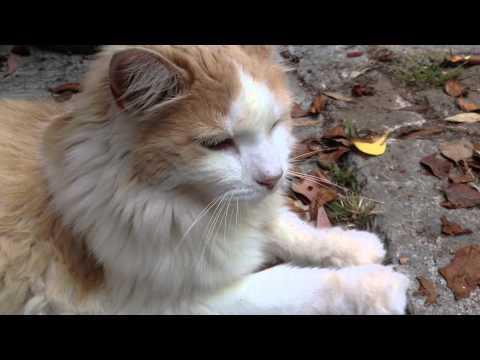 Sergeants Gold Flea Medicine Makes Cats Sick