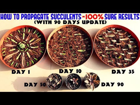 Propagate Succulents Like a PRO-Full Information